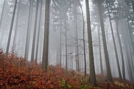misty forest at dawn in the autumn Stock Photo - 8552806