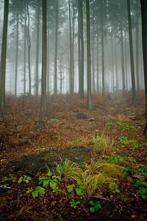 misty forest at dawn in the autumn Stock Photo - 8579728