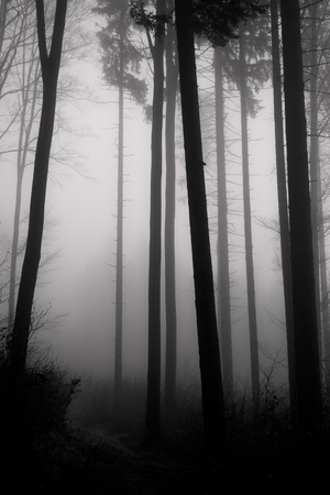 misty forest at dawn in the autumn Stock Photo - 8552354