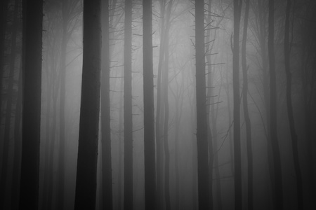 misty forest at dawn in the autumn Stock Photo - 8552305