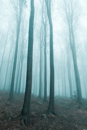 misty forest at dawn in the autumn Stock Photo - 8552532