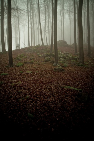 misty forest at dawn in the autumn Stock Photo - 8552456