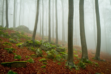 misty forest at dawn in the autumn Stock Photo - 8552796