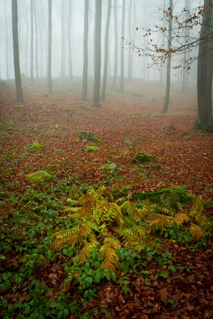 misty forest at dawn in the autumn Stock Photo - 8579945