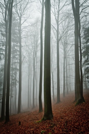 misty forest at dawn in the autumn Stock Photo - 8552795