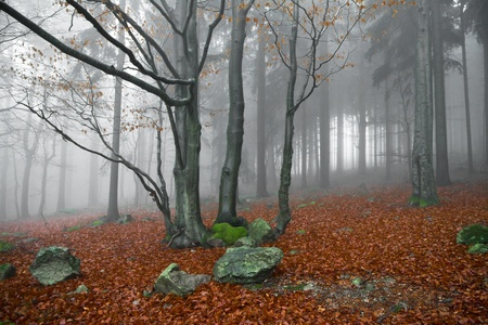 misty forest at dawn in the autumn Stock Photo - 8975557
