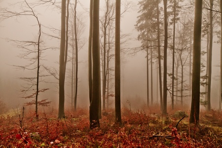 misty forest at dawn in the autumn Stock Photo - 8973398