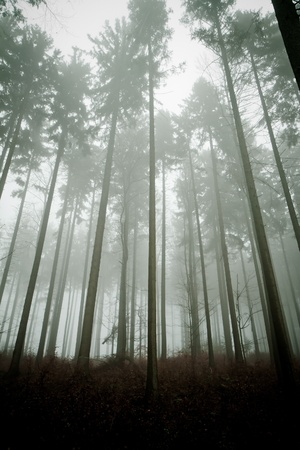 misty forest at dawn in the autumn Stock Photo - 8981135