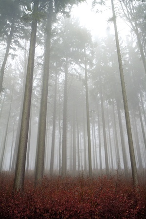 misty forest at dawn in the autumn Stock Photo - 8981192