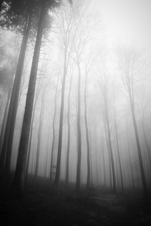 misty forest at dawn in the autumn Stock Photo - 8981000