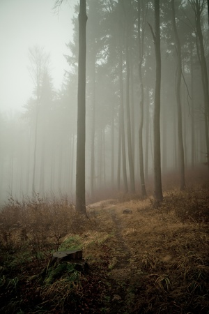 misty forest at dawn in the autumn Stock Photo - 8981168