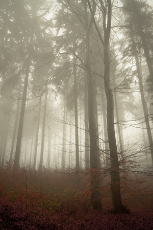 misty forest at dawn in the autumn Stock Photo - 8981188