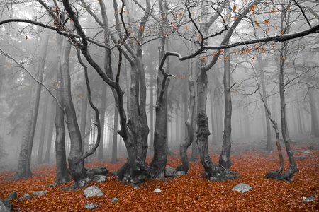 misty forest at dawn in the autumn Stock Photo - 9062581