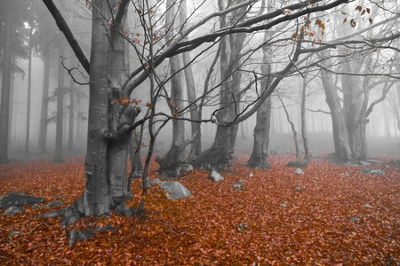 misty forest at dawn in the autumn Stock Photo - 9062537