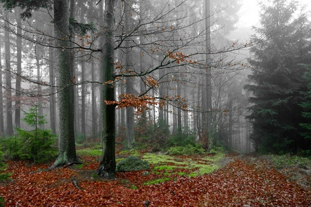 misty forest at dawn in the autumn Stock Photo - 9062460