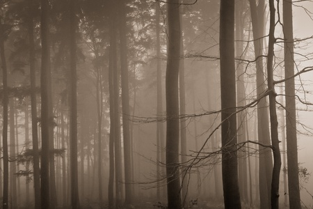 misty forest at dawn in the autumn Stock Photo - 9062532