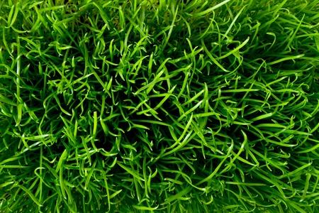 close up of fresh spring grass photo