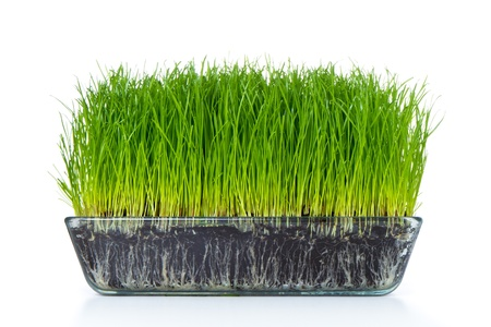 grass with soil isolated on white Stock Photo - 9170251