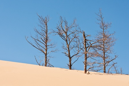 sand dunes eating up forest photo