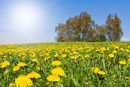 푸른 하늘이 아름 다운 시골 풍경 스톡 콘텐츠