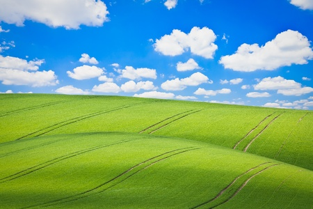 beautiful green field during springtime photo