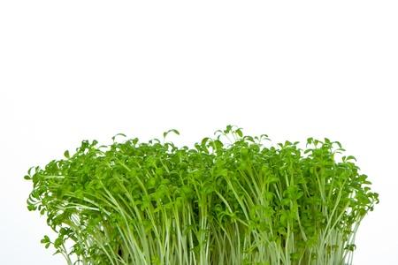 cress isolated on white background photo