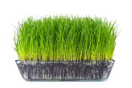 grass with soil isolated on white Stock Photo - 9401856