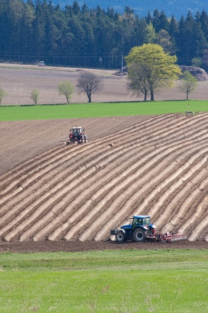 potato tree: tractor planting potatoes in the springtime