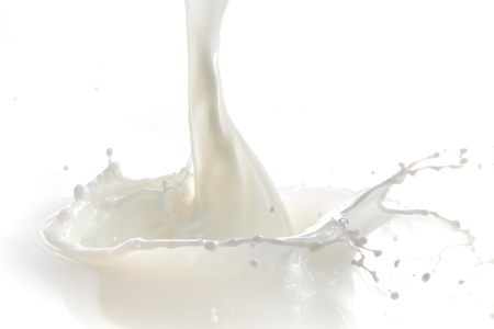 pouring milk: pouring milk splash isolated on white background