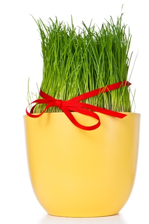 easter grass in flowerpot decorated with ribbon photo