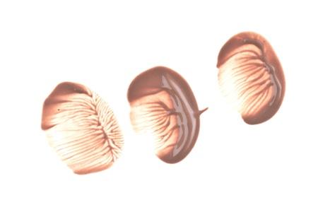 makeup foundation isolated on white background Stock Photo - 12727462