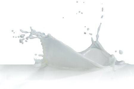 milk splash: splashing milk isolated on white background