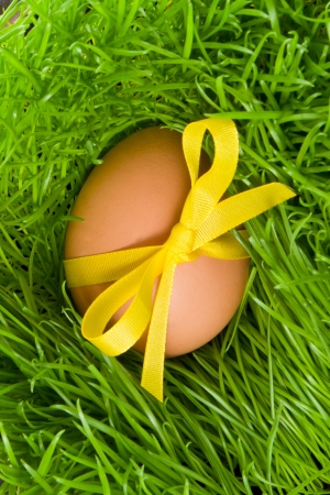 decorated easter egg in the grass photo