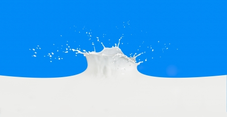 splashing milk isolated on blue background photo