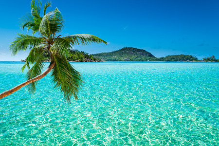 tropical beach with palm leaves