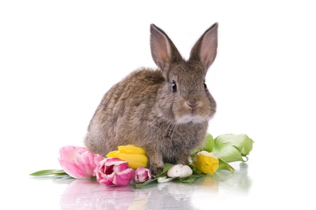 little rabbit and flowers on a white background isolation Stock Photo