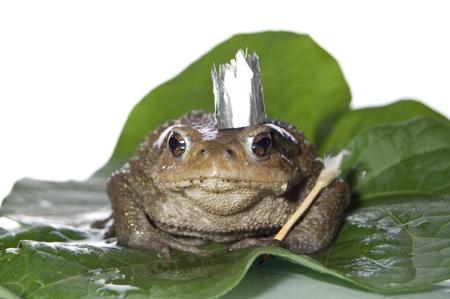 Queen-Frog  in anticipation of Prince studio photo