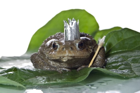 mistic: Queen-Frog  in anticipation of Prince studio photo
