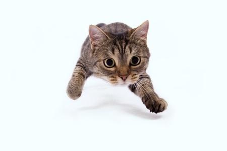 孤立した白地の上の猫を攻撃