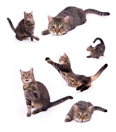 animal behavior: Attacking the different cats on the white isolated background Stock Photo
