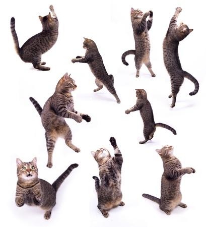 分離白地に 2 本足で猫