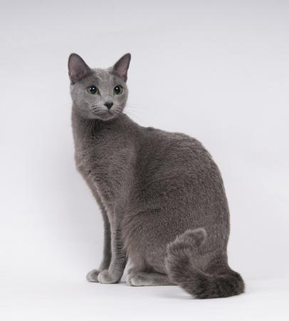 スタジオでのロシアの青猫
