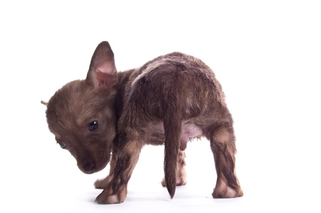 babby: small puppy on the white background