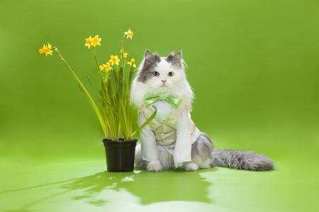 猫を祝う春の休日 写真素材