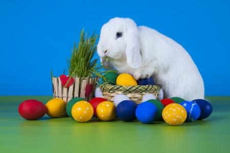 イースターのウサギとイースターエッグ