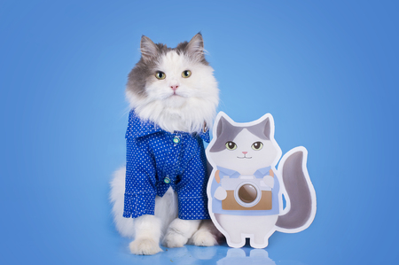 スマート シャツと青の孤立した背景に彼の二重猫