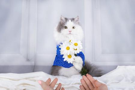 午前中にデイジーの花束と猫目を覚ます所有者 写真素材