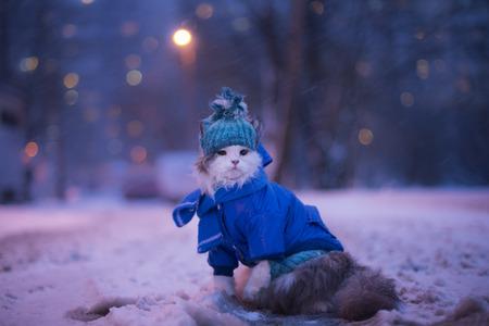 冬の猫の散歩 写真素材