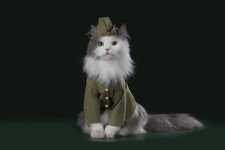 A cat in the uniform of a soldier Фото со стока