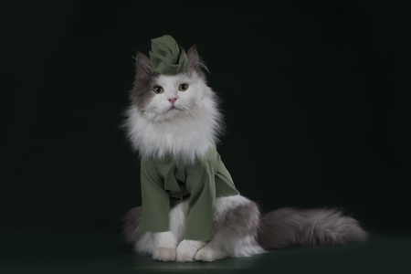 兵士の制服を着た猫